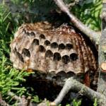 nest toohot