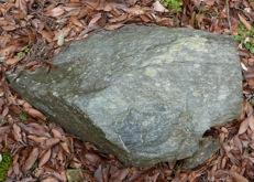写真5 朝熊山山中の蛇紋岩(2014年1月7日)