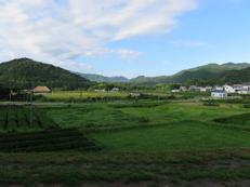 写真4 多気町相鹿瀬地区(2015年8月22日)