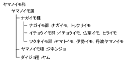 図1 ヤマノイモの分類(農文協,2011を改変)