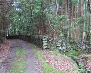 写真5 紀北町熊野古道伊勢路の猪垣。写真右側の杉植林地が旧田畑(2016年6月11日)