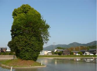 写真3 伊勢市楠部町の皇女の森(2015 年4月26日)
