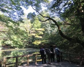 写真5 内宮の御池(2016年10月24日)