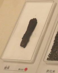 写真8 弥生時代の穂束(唐古・鍵考古学ミュージアム,2017年1月13日)