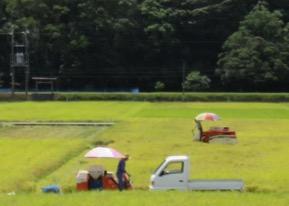 写真8 神宮神田黒皮鳥居前の一般水田における自脱型コンバインによる稲刈り(2016年8月21日)