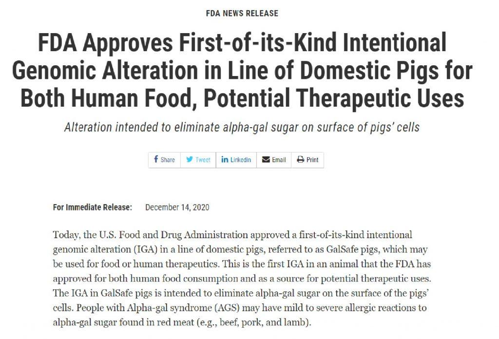 初の遺伝子組換えブタ承認を伝えるFDAニュースリリース